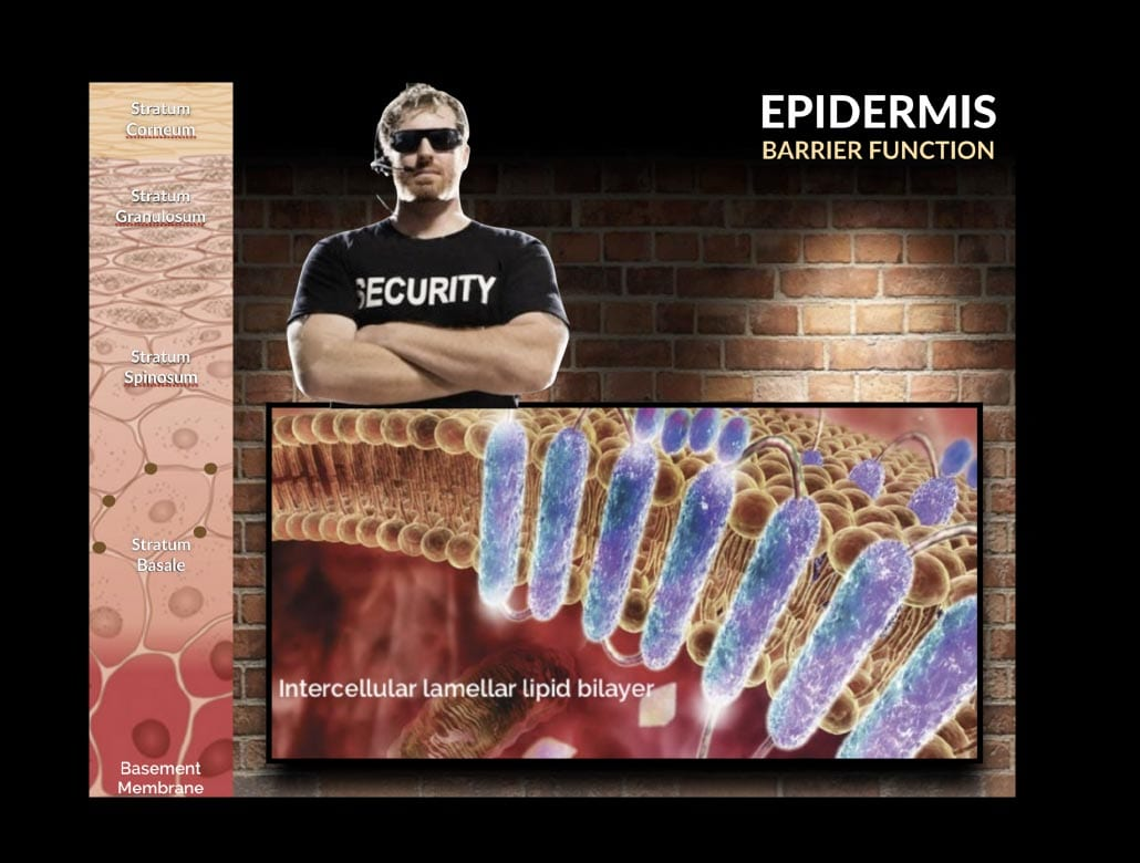 Epidermis Barrier Function